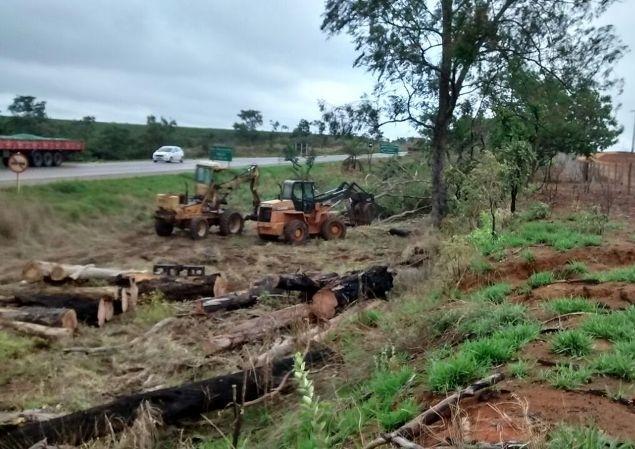 Tem início corte de Eucaliptos às margens da BR-354 entre Patos de Minas até a BR 262