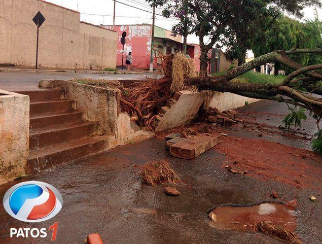 Tempestade com vendaval derruba árvores e leva perigo aos moradores de Patos de Minas