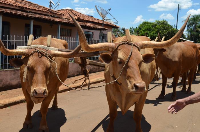 Carreiros participam do 18º Encontro de Carros de Bois no Distrito de Monjolinho