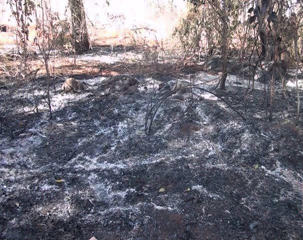 ONG de Patos de Minas visita a mata do Catingueiro que todos os anos sofre com queimadas criminosas