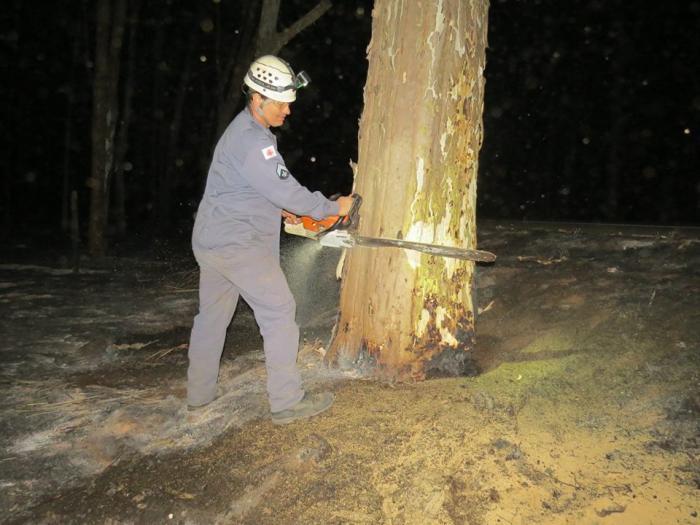 Após eucalipto cair e matar motorista autoridades contam que três mil árvores podem desabar na BR 354