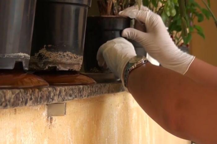 Patos de Minas teve até o momento 347 casos de dengue confirmados no ano de 2017
