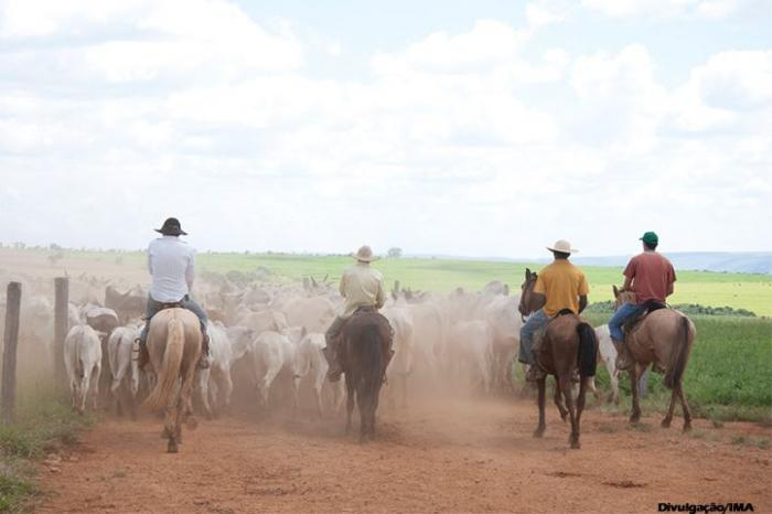 Recadastramento obrigatório de produtores rurais em Minas termina em 29/12