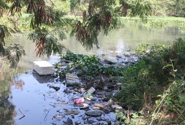 Segundo ambientalista poluição contribui para proliferação de aguapés no Rio Paranaíba em Patos de Minas