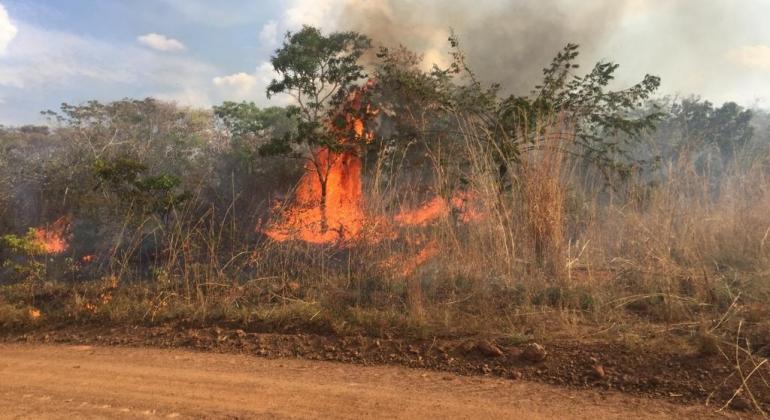 Queimada devasta reserva ambiental no município de Presidente Olegário