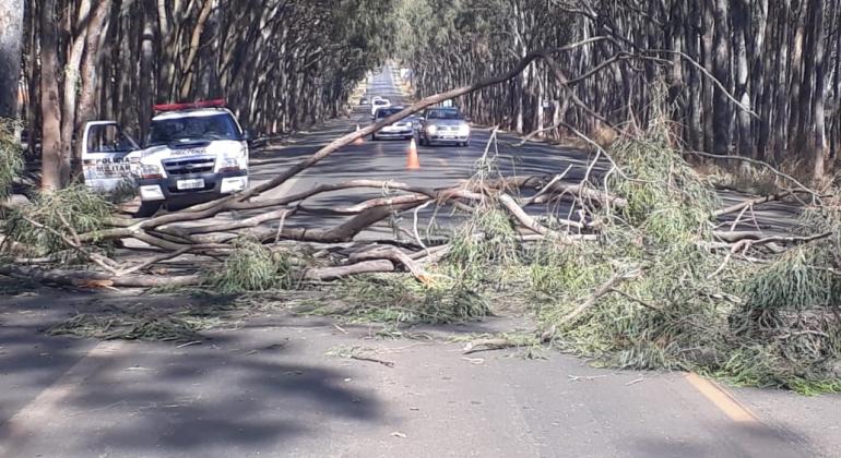 Queimadas continuam provocando quedas de eucaliptos em Carmo do Paranaíba