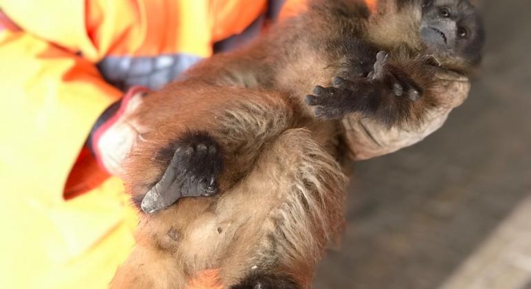Bombeiros capturam animais da fauna silvestre no perímetro urbano de Patos de Minas